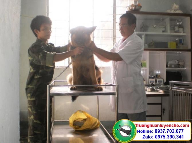 huấn luyện chó nghiệp vụ