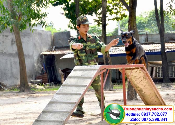 Huấn luyện chó Chị Quyên Quận 5
