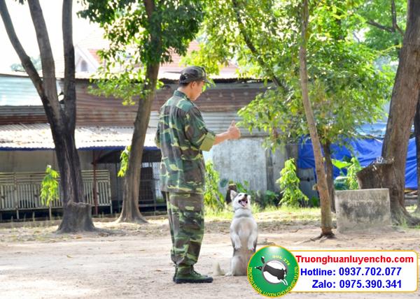 trường huấn luyện chó