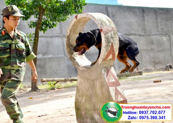 Huấn luyện chó Cty thủy sản Long An