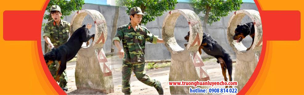 huan-luyen-cho-nghiep-vu-9