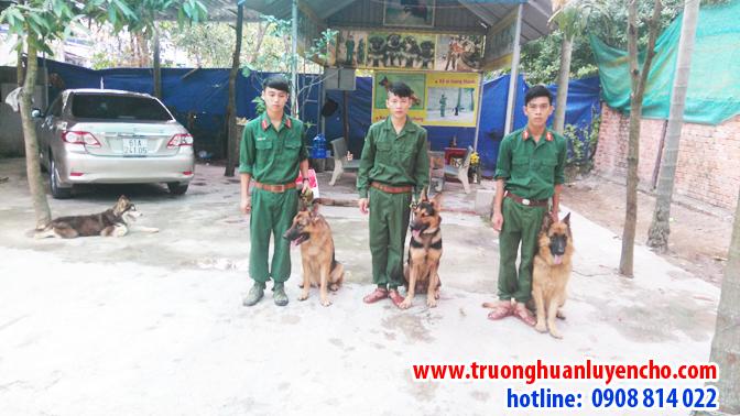 Trường huấn luyện chó nghiệp vụ chuyên nghiệp