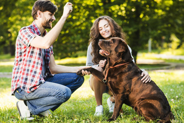 Cách huấn luyện chó Labrabor cơ bản tại nhà - Trường Huấn Luyện Chó