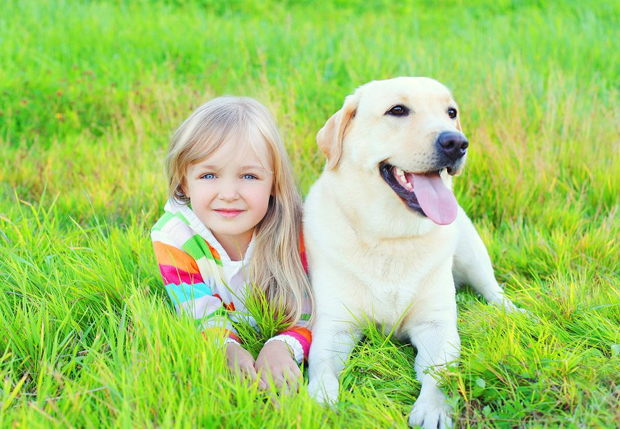 Portrait Child And Labrador Retriever Dog Lying On Grass In Summ